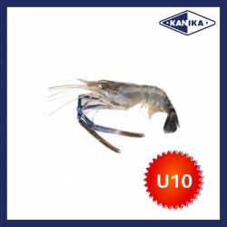 FROZEN HEAD ON SCAMPI-U10 (10KG/CTN)