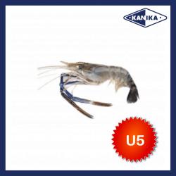 FROZEN HEAD ON SCAMPI-U5 (2KG/PKT)