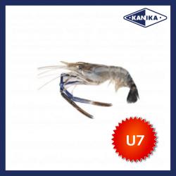 FROZEN HEAD ON SCAMPI-U7 (10KG/CTN)