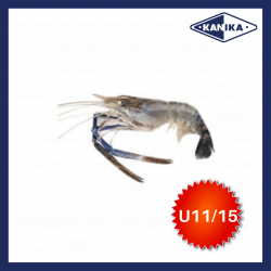 FROZEN HEAD ON SCAMPI-U11/15 (10KG/CTN)