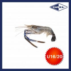 FROZEN HEAD ON SCAMPI-U16/20 (10KG/CTN)
