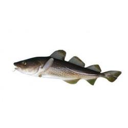 WHOLE COD FISH CAP-SB4/6