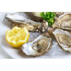 FROZEN 1/2 SHELL OYSTER 8/10 (+/-12pcs)