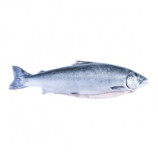 KANIKA FROZEN ATLANTIC SALMON WHOLE FISH 4.5KG(+-)